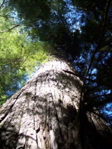 Quinault Forestry Department | Quinault Division of Natural Resources