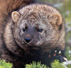 Quinault Timber, Fish and Wildlife Program | Quinault Environmental Protection Department