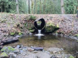 Saving Salmon Habitats | Quinault Fisheries Department