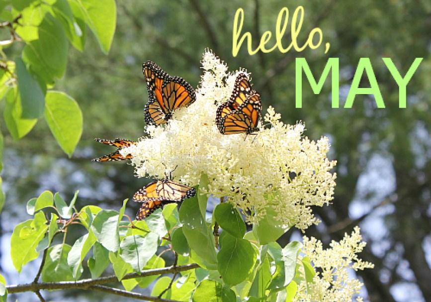 hello, may