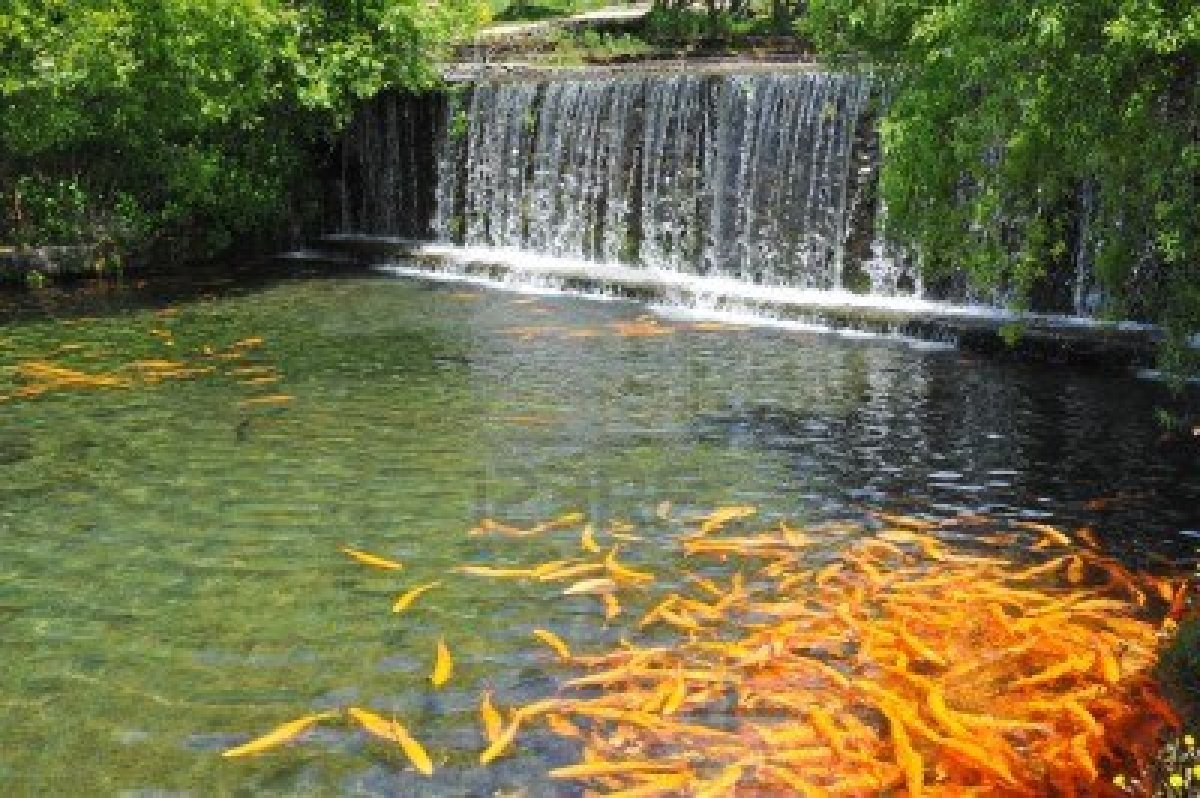 7 Most Breathtaking Koi Fish Ponds - Qnud on Backyard Koi Pond Designs  id=75482