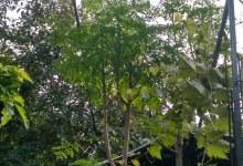 Photo of Desa Malaju Dompu Kembangkan Wisata Bahari Dengan Tanaman Kelor