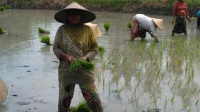 Petani perempuan