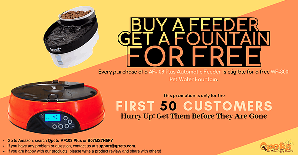 Buy a Feeder, Get a Fountain, for FREE! | Qpets com