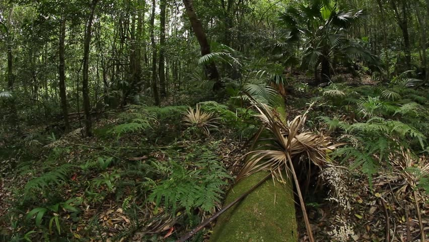 A wet season and a dry season. What Layer Of The Tropical Rainforest Do Most Animals Live In Quora