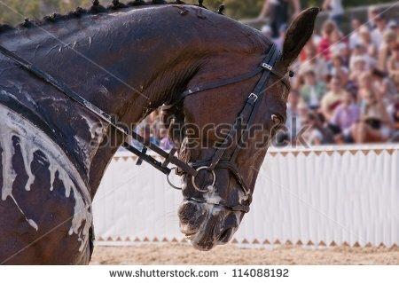 Why Do Horses Get White Foam Quora