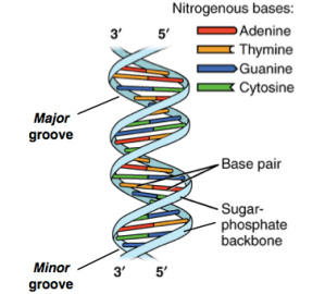 What is DNA? Explain with a diagram  Quora