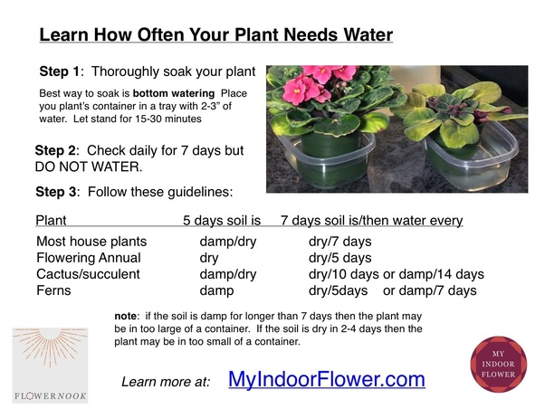 you can start with a basic watering once per week then use the following two charts to modify that amount for your plant