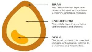 What is GMO golden rice?  Quora