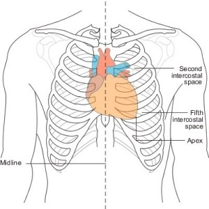 Why is cardiac pain usually in the center of the chest and