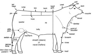 What are the external parts of a cow?  Quora