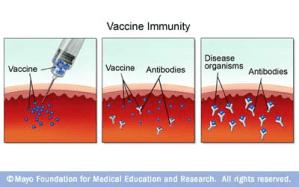 How do vaccines work?  Quora