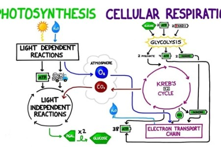 Photosynthesis and cellular respiration map photosynthesis path term papers writers professional writing services aerobioc photosynthesis and cellular respiration quiz proprofs quiz easy method for making a ccuart Images
