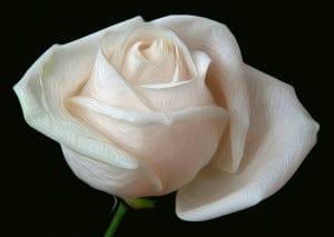 Die Polizei und die weißen Rosen