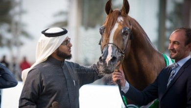 "Photo of عشاق الخيول العربية الأصيلة يودعون البطل ""ايدن سي"" 2005 – 2020 – انجازات وصور"