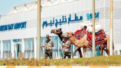 Photo of نادي الإبل يطلق «قافلة المستقبل» من نيوم