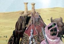 صورة الهجانة… أدوار تاريخية على مدى 90 عاماً في المملكة