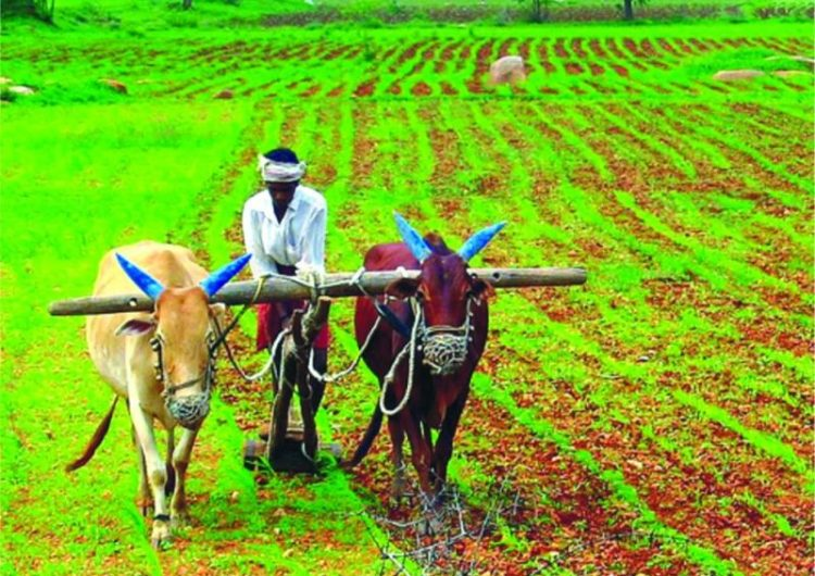 Feminisation Of Agriculture: Changing Trends In Indian Agriculture