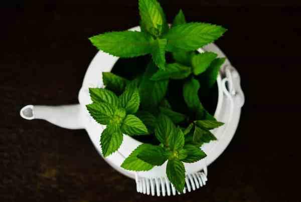 Heilpflanzenöle und ihre Qualitätsmerkmale