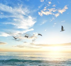 seagulls flying in the sky