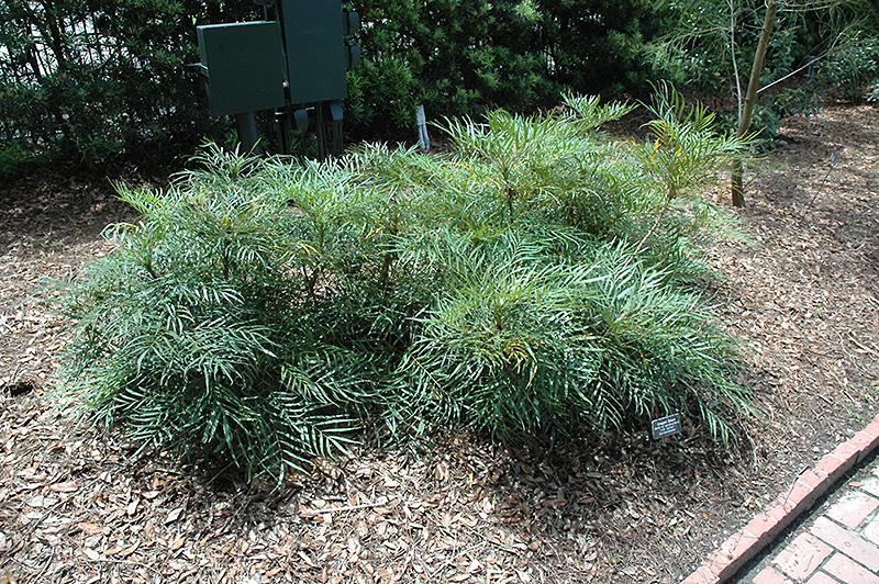Above Ground Garden Tips