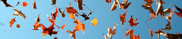 banner-falling-leaves-3