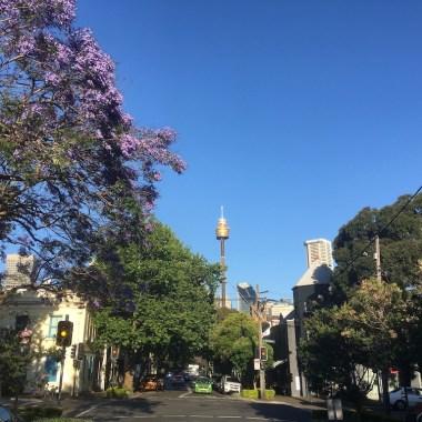 Jacarandas in Sydney