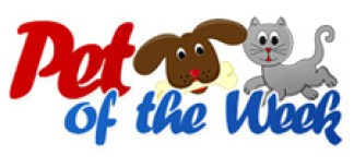 pet-of-the-week-featured
