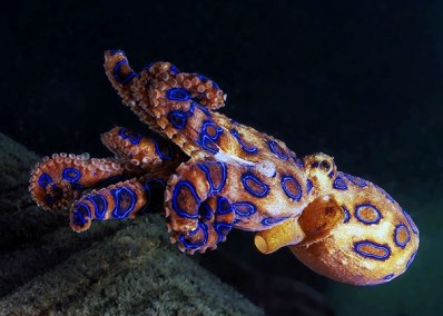 150623_WILD_Octopus.jpg.CROP.promo-mediumlarge