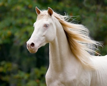 The Sorraia Mustang