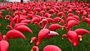 PinkFlamingos.jpg.653x0_q80_crop-smart