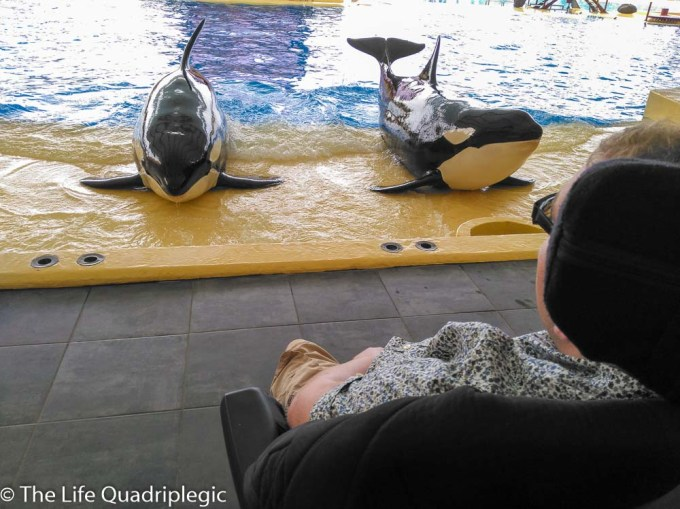 2 killer whales are laying on a concrete platform next to a large pool of water.