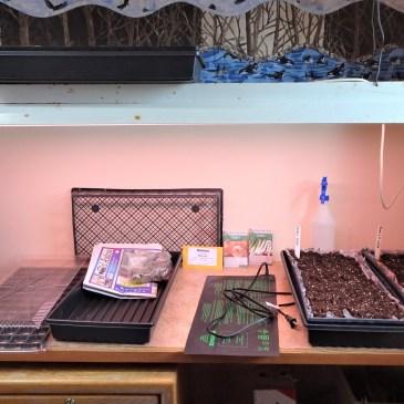 Through the Seasons in a Quadra Food Garden: Blog #2