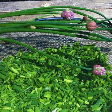 Turning Chives Into Salt