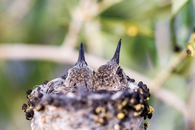 3rd Place Hummingbird Siblings