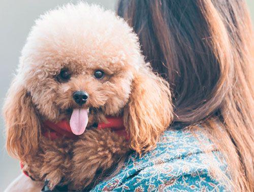 Servicios de Asistencia mascota - Quality Assist home