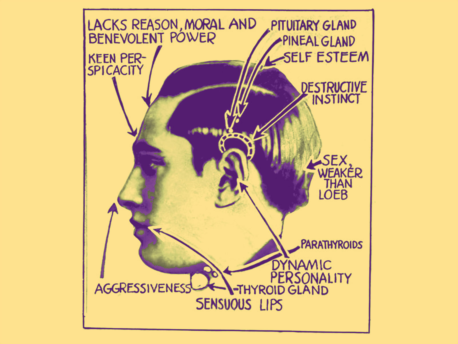 Phrenological Diagram, Leopold and Loeb