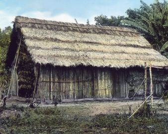 Ein Haus im Urwald