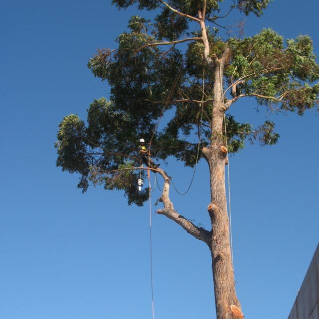 Démontage technique, branches en rétention