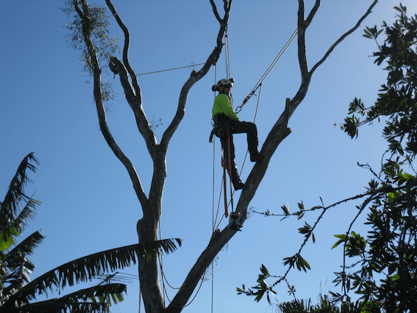 Techniques de grimpe et travail en sécurité