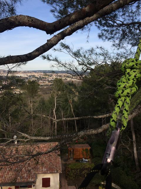Grimper en haut, vue d'une arboriste