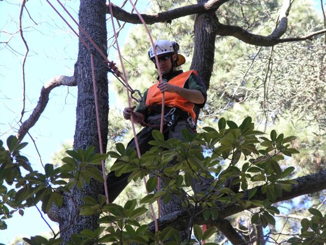 Quantacav-arboriste-elagueur-grimper-preparation cordes