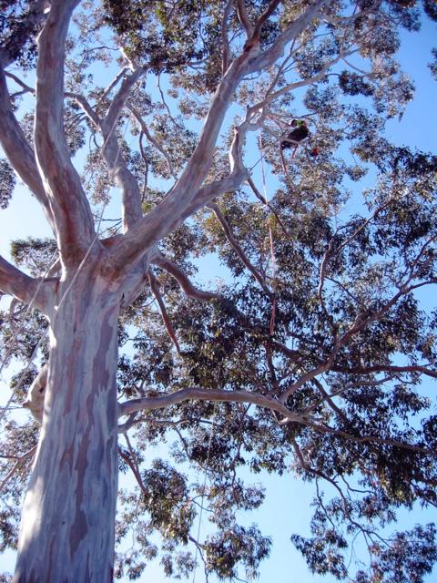 Quantacav-arboriste-elagueur-grimper-taille-bois mort