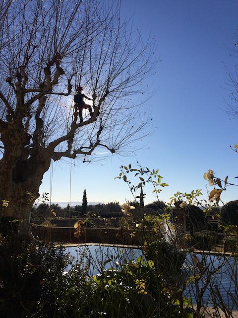 Quantacav-arboriste-elagueur-taille arbre-tete de chat