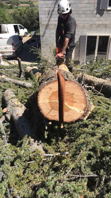 Quantacav-arboriste-elagueur-tronconneuse-couper tronc-planche