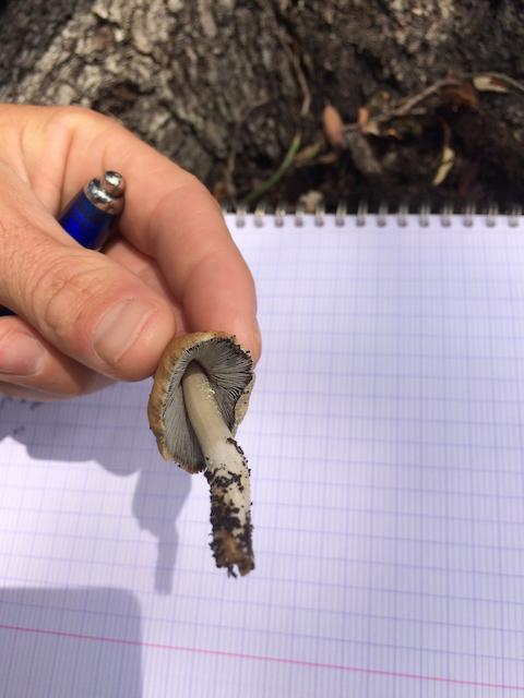 Quantacav-arboriste-expert-champignon