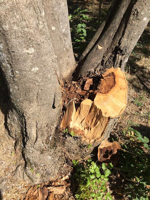 Quantacav-arboriste-expert-pourriture-rupture