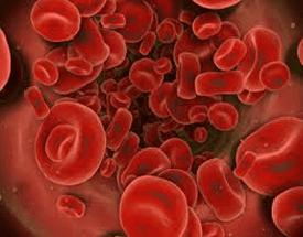 Figura 4 globuli rossi