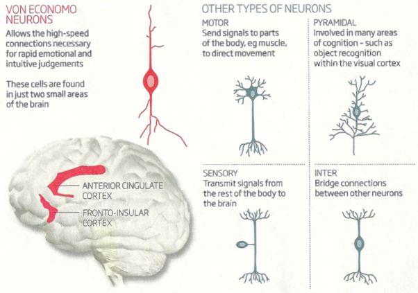 I10-90-neurons