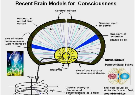 Fig. 6: Some models that have been proposed for human consciousness